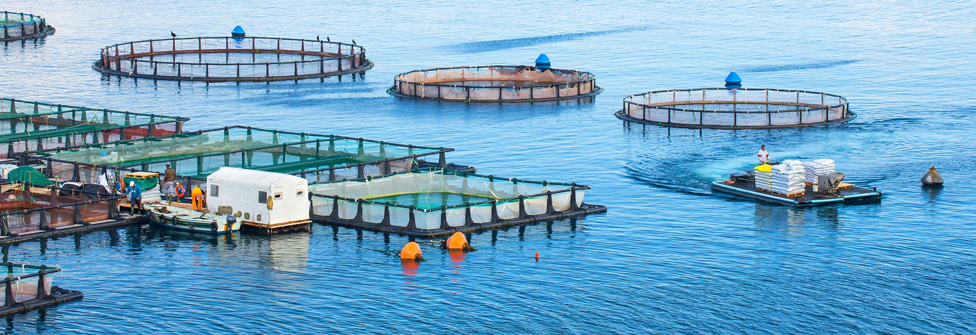 Aquaculture Advisory Council
